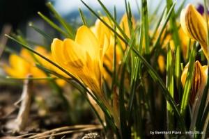 Erste Bilder mit Canon G7X - Frühling 2015